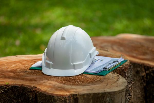 faculdade de engenharia florestal